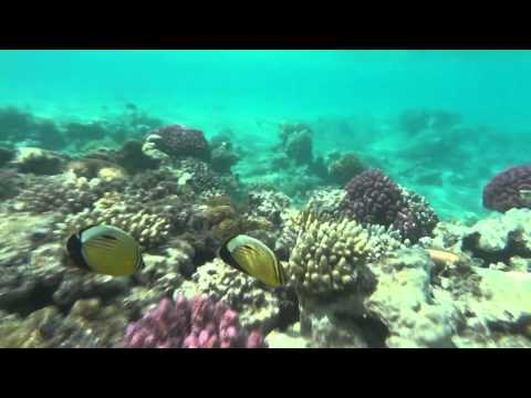 Egypt - Hurghada, Red sea, Safari,..