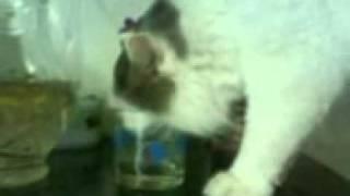 Кот пьет водку))))))