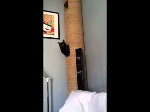 Hamac pour chat fabrication maison funnycat tv - Arbre a chat truffaut ...