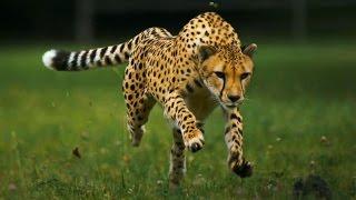 Run fast and love running