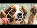A Dog's Purpose - A Dog's Purpose release clip compilation (2017)