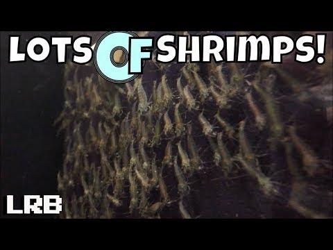 flip-aquatics-part-1-between-the-shrimp-rooms-and-the-neocaridina-and-nano-fish-room