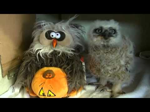 Baby owl and toy sing Monster Mash