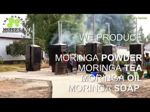 How we produce The Gambia Moringa in Jahaly / Gambia