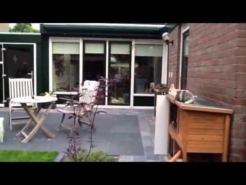 Super jump konijn 2 meter