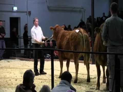 CATTLE.de: 3. Polled Limousin Sale RSH 084