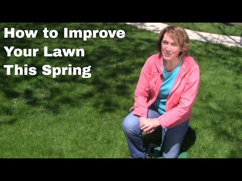 How to Improve Your Lawn this Spring