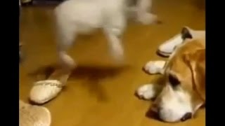 #5Cute / Funny animal videos - Cats, Dogs, Animal video clips