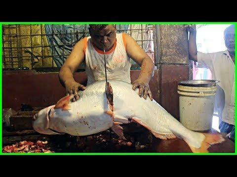 Big Pangasius And Dwarf Goonch Catfish Cut Into Pieces In Fish Market By Famous Fishmonger 2019