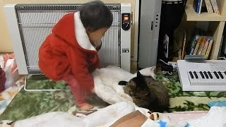平和な昼下がり、お昼寝したくなったヒメちゃんは・・・ (字幕へのご協力をお願いします http://www.youtube.com/timedtext_video?v=W7J7C5DXUZ8&ref=share )