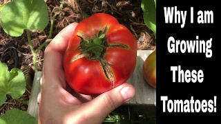 Growing Tomatoes - Varieties I am Growing and Why I Grow Them