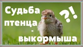 Поболтаем | Почему птенцов-выкормышей нельзя выпускать на волю?!