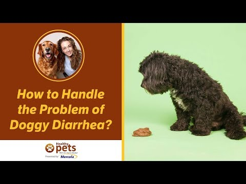 How to Handle the Problem of Doggy Diarrhea?