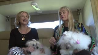 Pet Psychic Explains Animal Reincarnation & Reads A Show Poodle