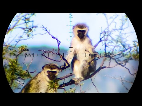 The Best Monkey & Baboon Hunting Compilation on YouTube – 88 Shots in 4K!
