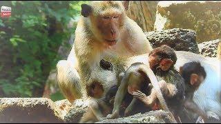Why Babies Monkey hate Dunkey Leader? Youlike Monkey 1648