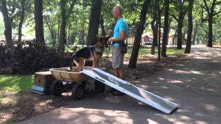Iacp Video Of The Month | Teaching A Dog To Use A Ramp With Tod Mcvicker