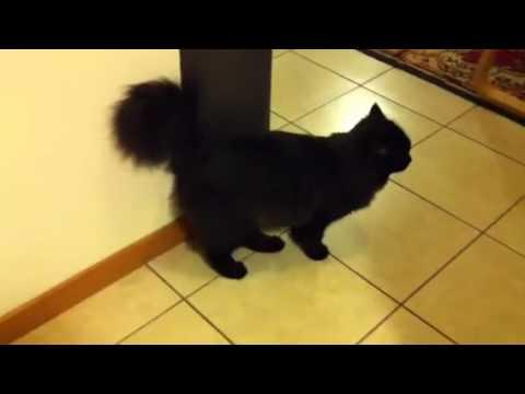 Gatto Nero Youtube