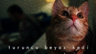 Mehmet Alp - Turuncu Beyaz Kedi