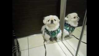 http://yuyuthepeke.blogspot.jp/ *ゆゆちゃんプロフィール/Yuyu's prof...
