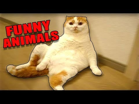 ANIMALS ON DRUGS! *Extremely Funny Animals* – (Funny Animals/Pets Compilation) 2017 NEW