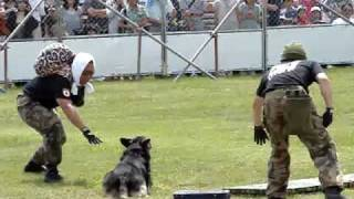 航空自衛隊千歳基地航空祭に行ってきました! 歩哨犬訓練展示です♪ 「警...