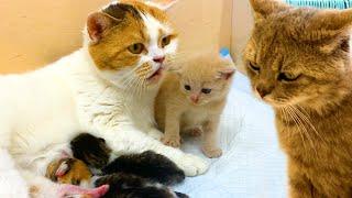 Papá el gato castigó a mamá el gato que dejó solos a los gatitos