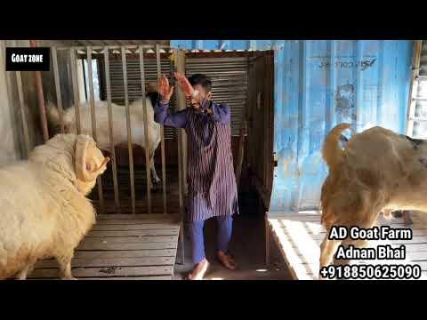 AD Goats Farm