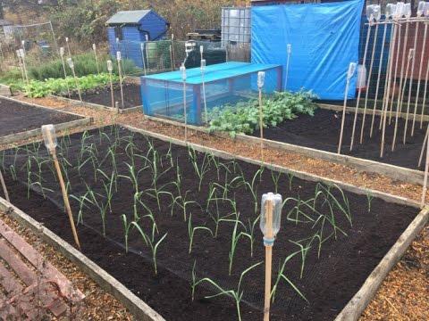 Preparing Raised Bed For Garlic U0026 Repairing GreenHouse