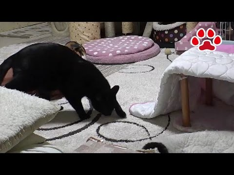A cat left its poop【Cats room Miaou】