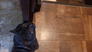 可愛い猫の突然の出来事!毎日起きてる事だけど、あれじゃなく、これでしたか!10月23日夜の出来事!黒猫はち。第337話 thumbnail