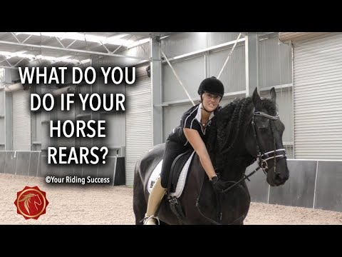 Download WHAT DO YOU DO IF YOUR HORSE REARS?  - FearLESS Friday Episode 65
