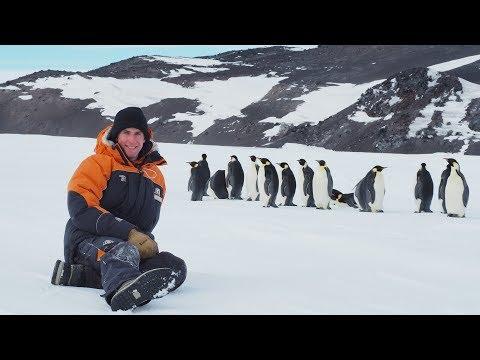 The cutest penguins of Antarctica