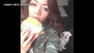 Funny pets compilation 2019/Funny cats and dogs 2019/Funny animals 2019