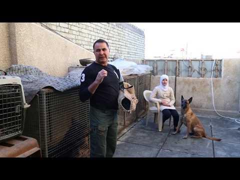 تقرير مدرب كلاب بوليسة || قناة الشرقية ||