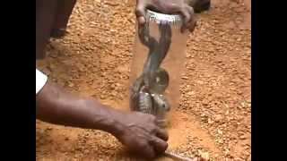 catching snake at Villiappally