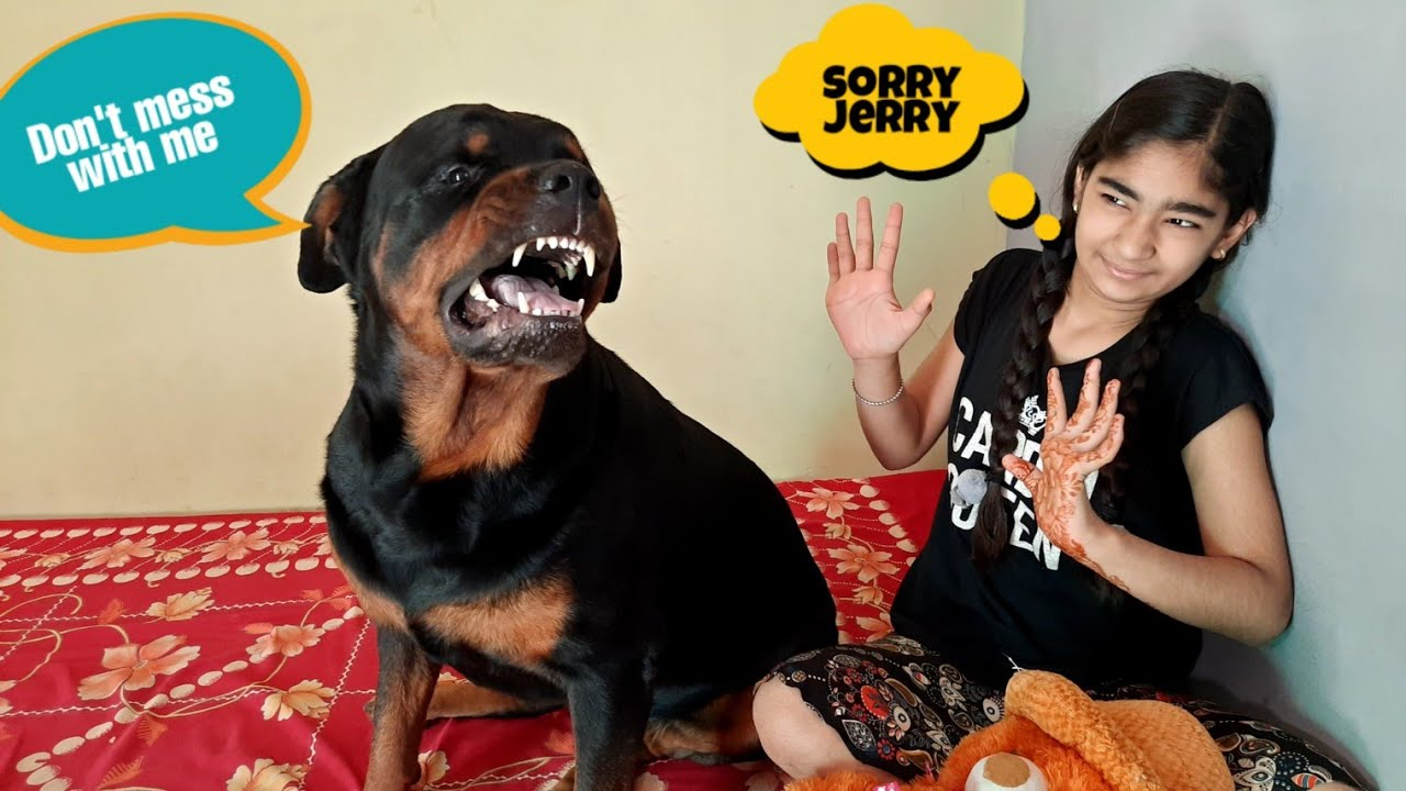 Download Anshu steals Jerry's teddy.jerry is very angry with anshu.best guard dog