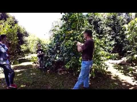 GoPro Video Tour Ninole Fruit Orchard with owner John Mood, Hamakua Coast Big Island Hawaii