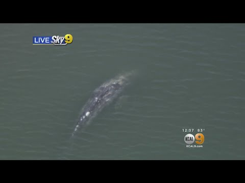 Whale Spotted Off Coast Of Long Beach
