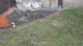 Garten in die Luft sprengen
