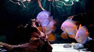 Рыхление песка в аквариуме