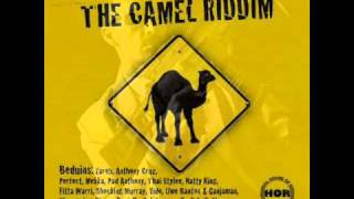 Thai Stylee - Don A Gwaan (The Camel Riddim)