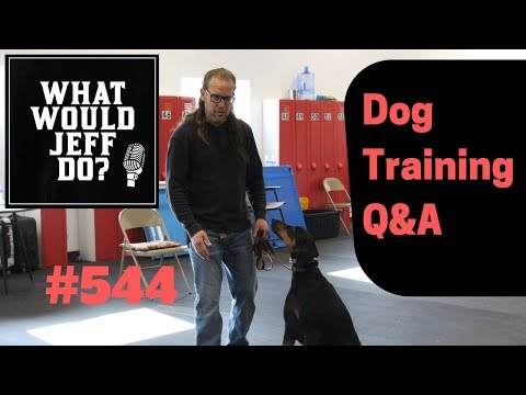 getting-a-dog-to-swim-|-stop-dog-barking-|-what-would-jeff-do?-dog-training-q-&-a-#544