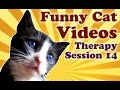 Sleepy Cute Kitten Vines: Funny Cat Video Vines of Sleepy Cute Kittens