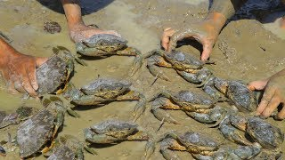 Unique Fishing   Catching Crabs In Dry Season  Find Many Carbs in Secret
