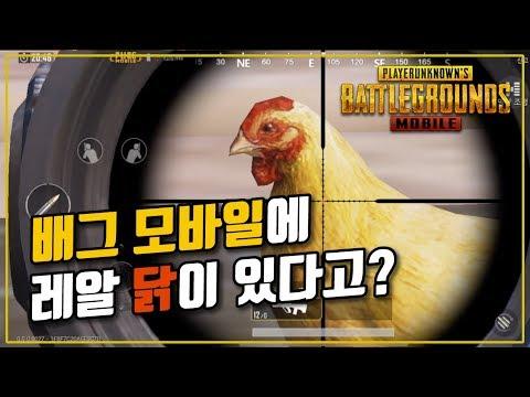 배그 모바일 훈련장에 닭이 있다고? 찾아보러