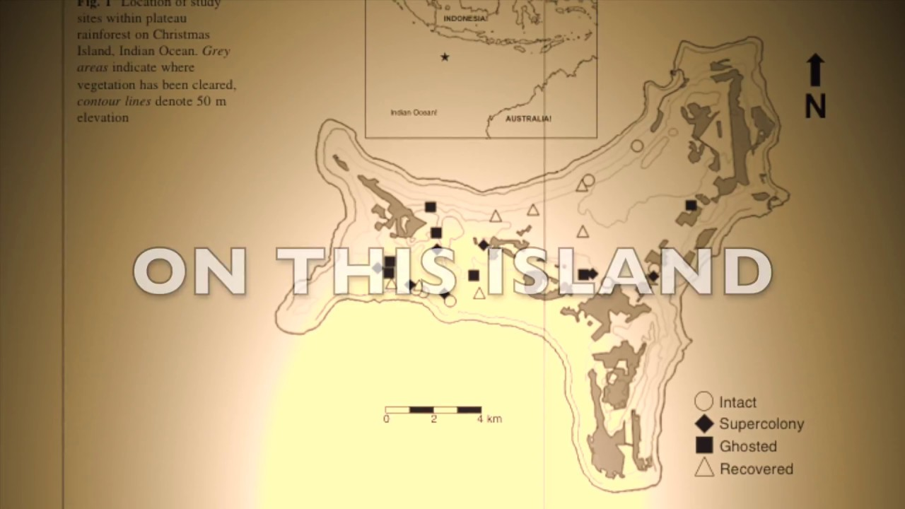 Where Is Christmas Island On A Map.The Invasion Of Land Snails On Christmas Island Is Thanks To Yellow Crazy Ants