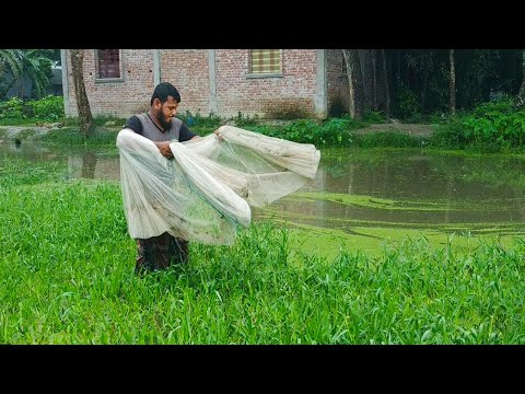Traditional Net Fishing Ll Fish Hunting With Cast Net Ll Fish Catching With Beautiful Natural Pond