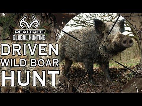 Wild Boar Hunt In The Czech Republic