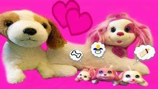 Видео для детей Ждём Щенков  Собака Рокси родила щенков Video for children  Dog Roxy